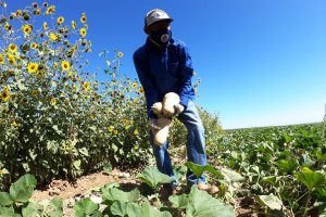 A Fresno-area politician wants California to prioritize struggling San Joaquin Valley farmworkers in a proposed pilot program that would put cash in the hands of some the state's impoverished residents. Photo Credit -- by Juan Esparza Loera