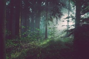 forest sebastian-unrau-sp-p7uuT0tw-unsplash